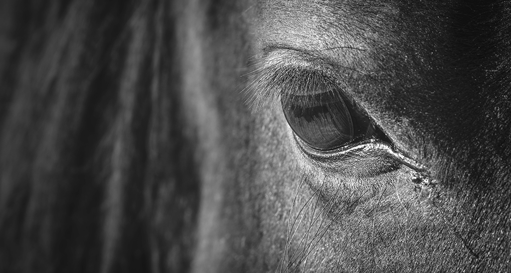Europe's Horse Meat Scandal was a Warning for Due Diligence – Lessons Learned